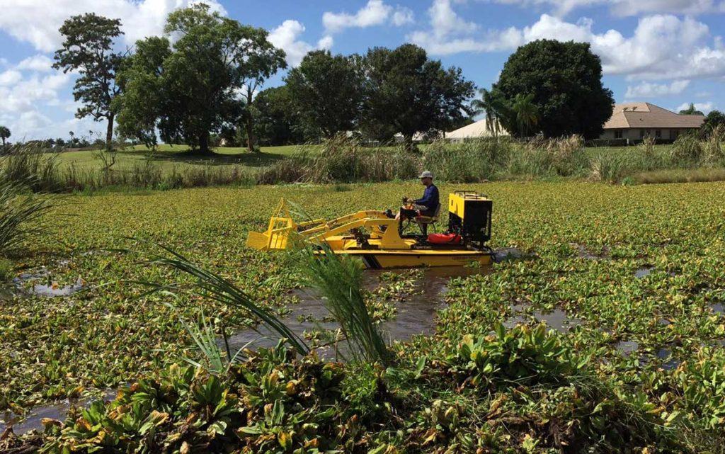 Pond Weed Cleanup