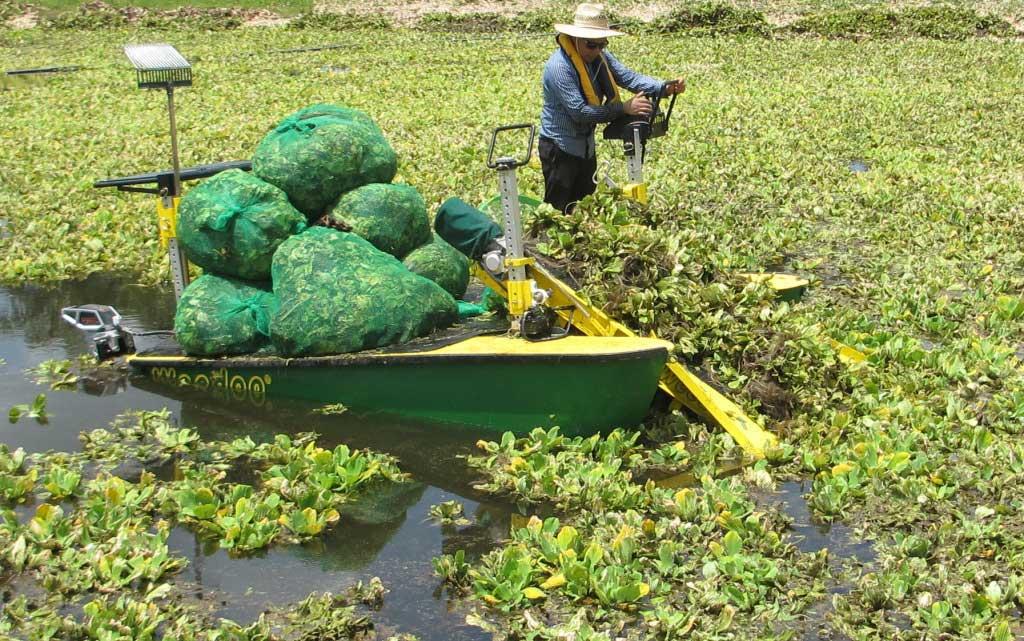 Aquatic harvester