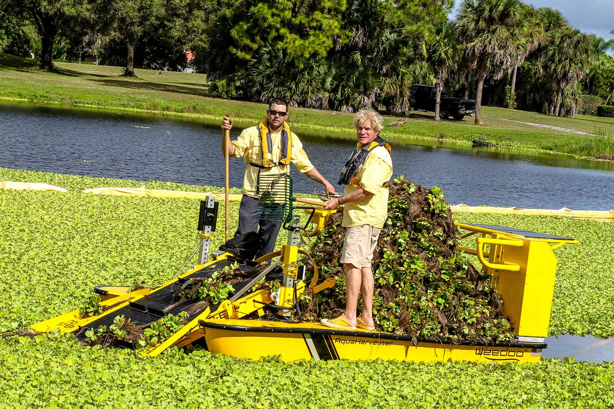 Lake weed cutter