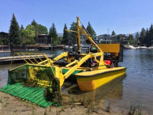 Algae removal