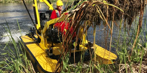 TigerCat removing Cattail